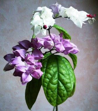 Комнатное растение фото с названиями